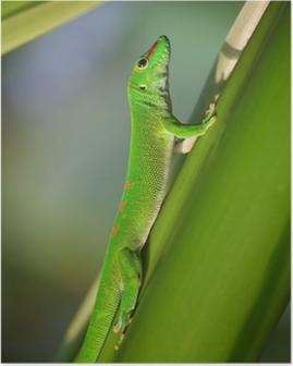 Poster Gecko verde