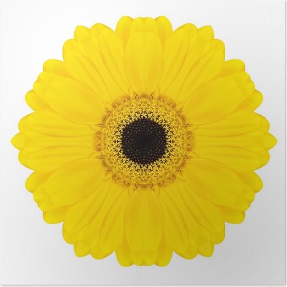 poster gelb concentric gerbera blume isoliert auf wei mandala pixers wir leben um zu. Black Bedroom Furniture Sets. Home Design Ideas