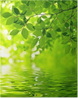 Poster Green leaves