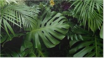 Poster Grüne tropische Blätter monstera, Palmen, Farn und Zierpflanzen Hintergrund Hintergrund