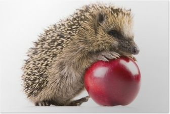 Poster Happy hedgehog