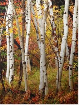 Poster Herbst Birken
