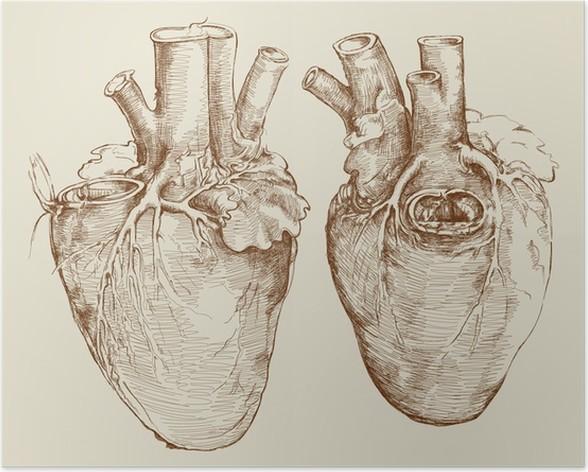 Poster Herz. Basierend auf Zeichnung von Leonardo da Vinci • Pixers ...