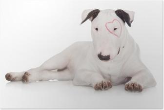 Poster Inglese bull terrier cucciolo con un cuore disegnato