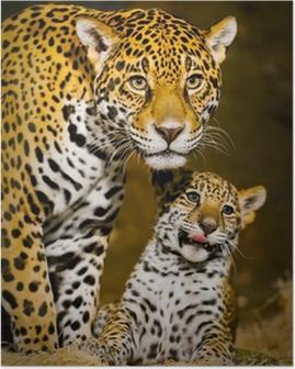 Poster Jaguar Cubs