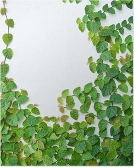 Poster La pianta rampicante verde sul muro per lo sfondo.