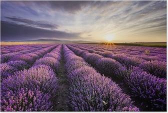 Poster Lavendel Sonnenaufgang