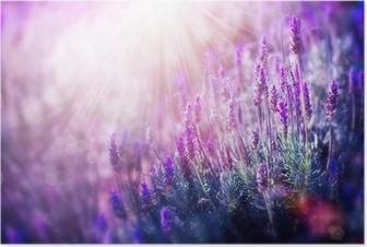 Poster Lavendelfeld
