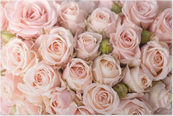 poster leuchtend rosa rosen hintergrund pixers wir leben um zu ver ndern. Black Bedroom Furniture Sets. Home Design Ideas