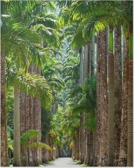 Poster Orto botanico. Rio de Janeiro