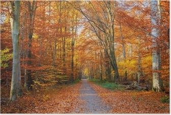 Poster Pathway in den herbstlichen Wald