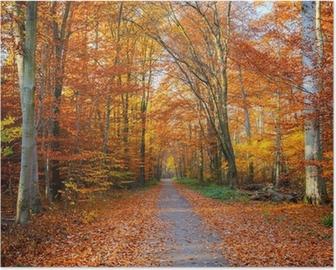 Poster Percorso nella foresta di autunno