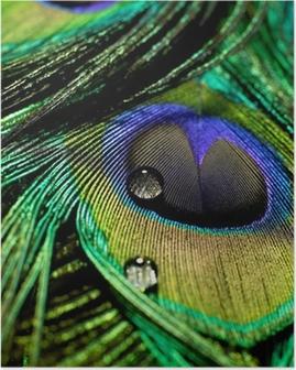 Poster Piuma di pavone scende