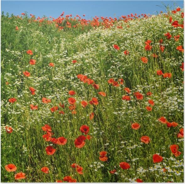 Poster Prato di fiori in estate • Pixers® - Viviamo per il cambiamento