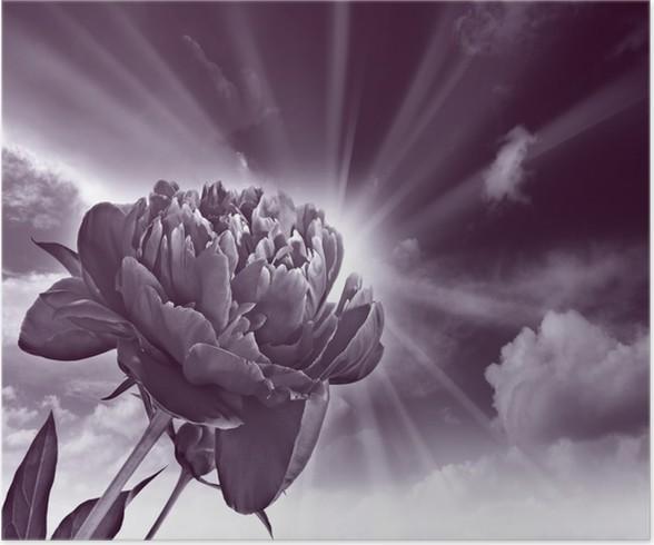 Poster Quadro monocromatico di peonia fiore e il cielo • Pixers