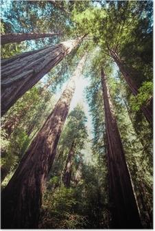 Poster Redwood National Park in Kalifornien, USA