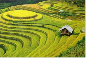 Poster Reisfelder auf Terrassen in vietnam