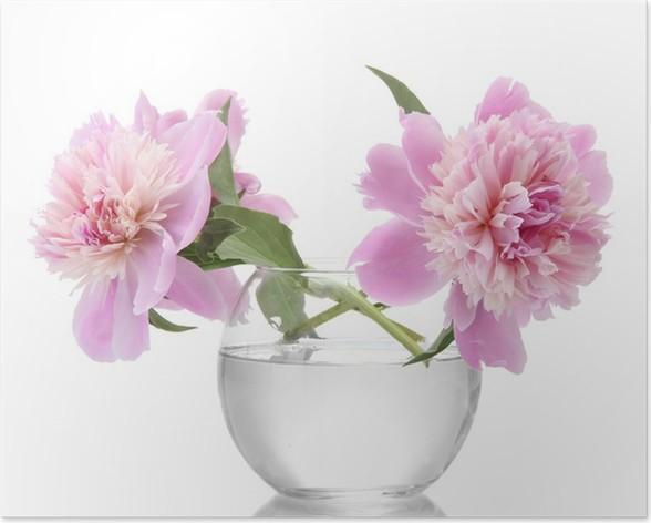 Pfingstrosen In Der Vase : poster rosa pfingstrosen blumen in der vase isoliert auf wei pixers wir leben um zu ver ndern ~ Buech-reservation.com Haus und Dekorationen