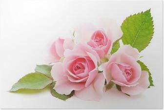 Poster Rosen rosa