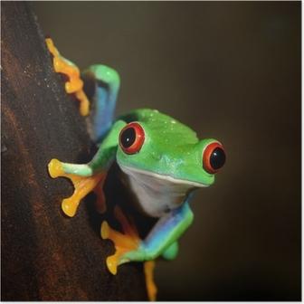 Poster Rote-Augen-Frosch Rotaugenlaubfrosch im Terrarium