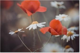 Poster Rote Mohnblumen und wilden Gänseblümchen