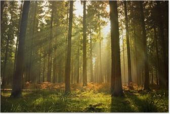Poster Schöner Wald