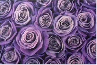 Poster Sfondo di fiori di rosa