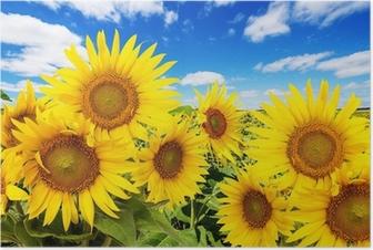 Poster Sonnenblumenfeld und blauer Himmel mit Wolken