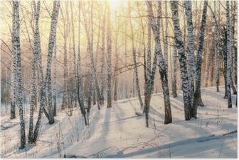 Poster Sonnenuntergang im Winterwald