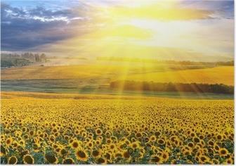 Poster Sonnenuntergang über dem Feld