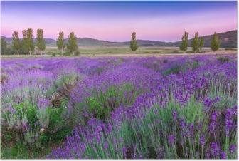 Poster Sonnenuntergang über einem Lavendelfeld im Sommer