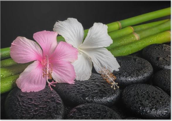 Poster Spa-Konzept Zen Basaltsteinen, weiß und rosa Hibiskus-Blume ...