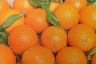 Poster Tasty valencianischen Orangen frisch gesammelten