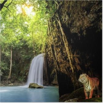 Poster Tigre nella giungla