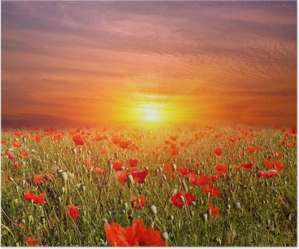 Poster Tramonto sul prato di fiori • Pixers® - Viviamo per il ...