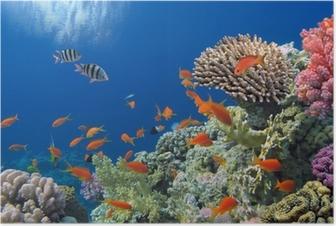 Poster Tropische Fische am Korallenriff im Roten Meer