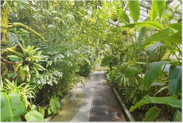 Poster Tropische Pflanzen in einem Gewächshaus bei Botanischen ...