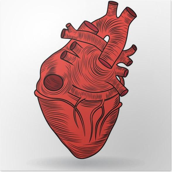 Poster Vektor Taste oder das Symbol eines menschlichen Herzens ...