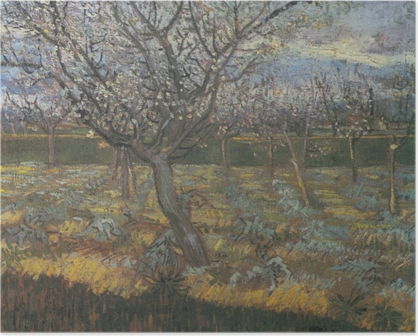 Poster Vincent van Gogh - Blühender Obstgarten mit Aprikosenbäumen - Reproductions
