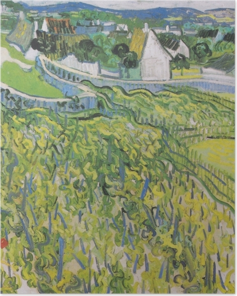 Poster Vincent van Gogh - Weinberge mit Blick auf Auvers - Reproductions