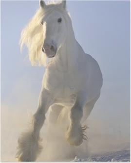 Poster Weißen Pferd laufen Galopp im Winter