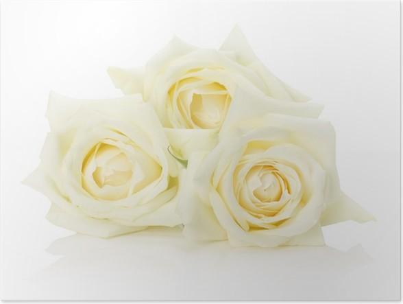 Poster Weißen Rosen auf dem weißen Hintergrund • Pixers® - Wir leben ...