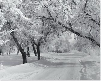 Poster Winter Park, Landschaft