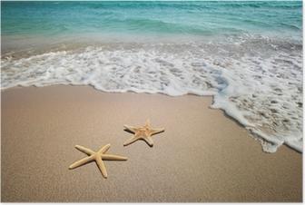 Poster Zwei Seesterne am Strand