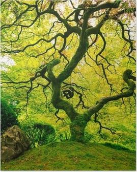 Póster Amazing Green Tree