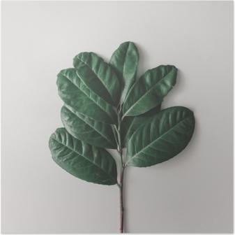 Póster Arranjo mínimo criativo das folhas no fundo branco brilhante. Lay plana. conceito de natureza.