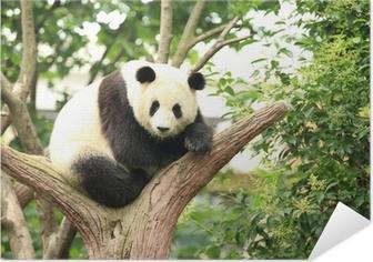 Póster Autoadesivo Panda gigante na floresta