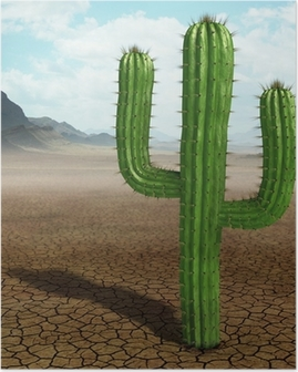 Póster Cactus in the desert