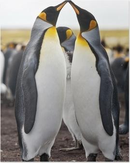 Póster couple king penguins