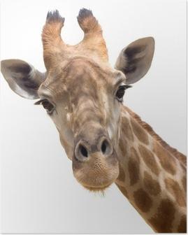 Póster em HD Giraffe closeup
